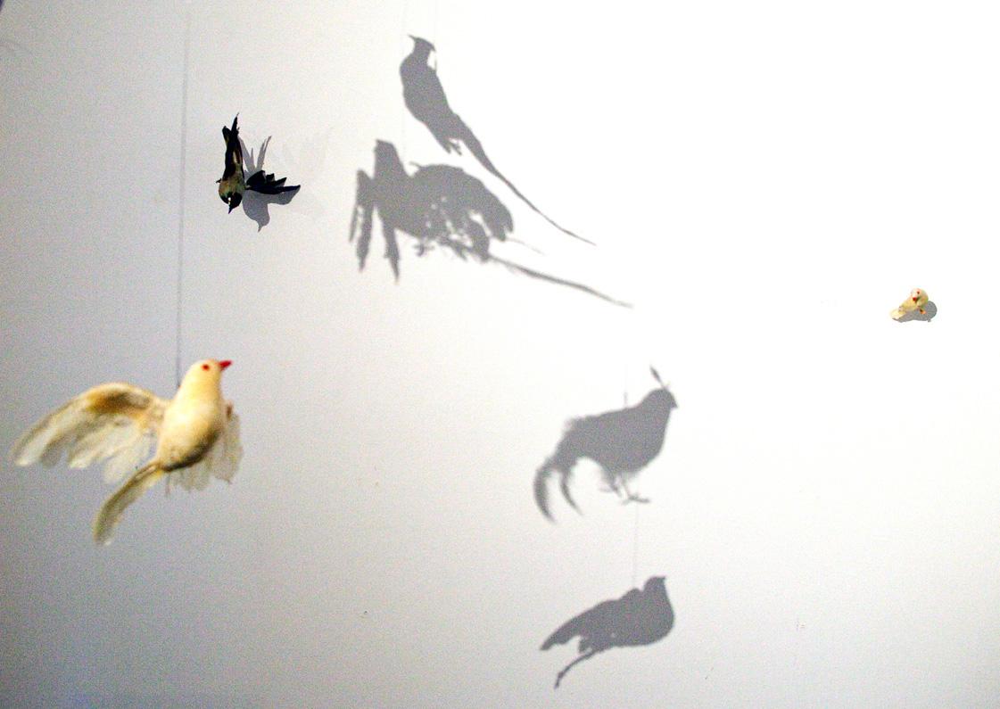 Debra Stuckgold, Bounty, installation view