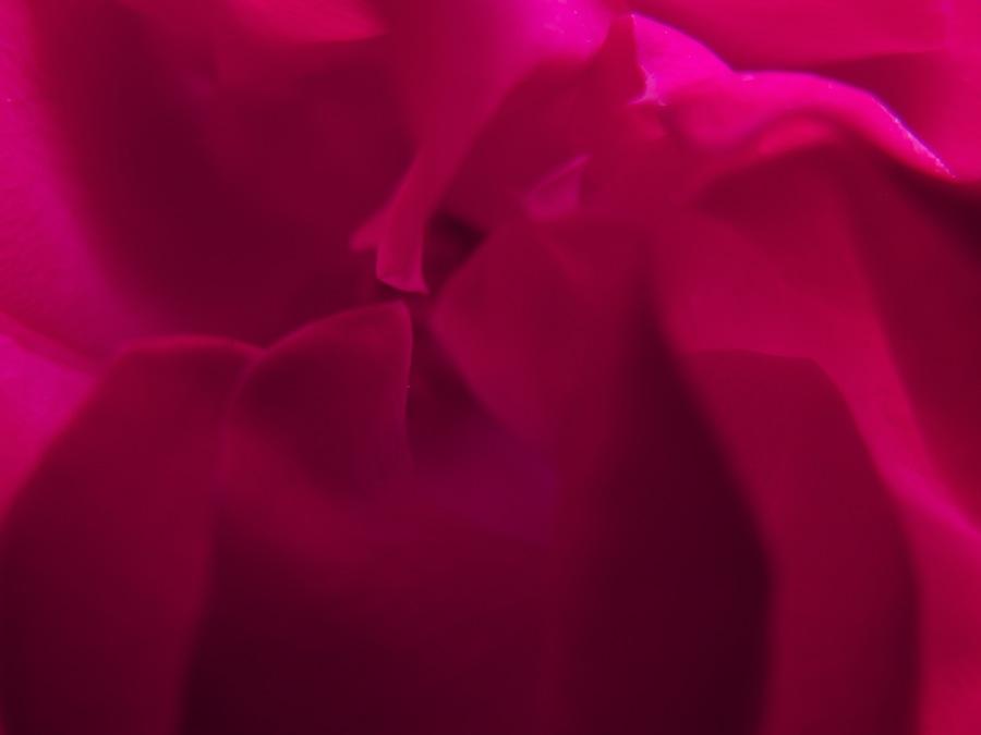 "Juanita Romo, ""rosa mexicano"""