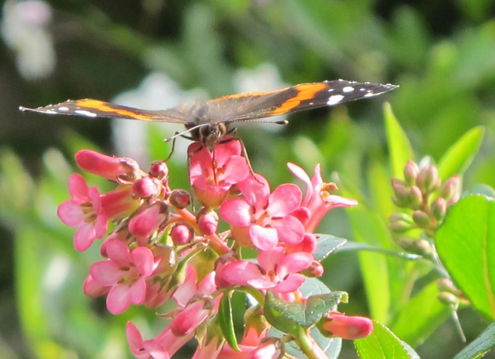 "Maricela Mora, ""nectar"""