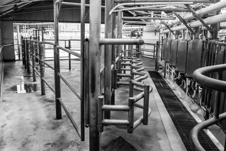 Mario Garcia, Lugar de Ordeña (Milking Barn) bw