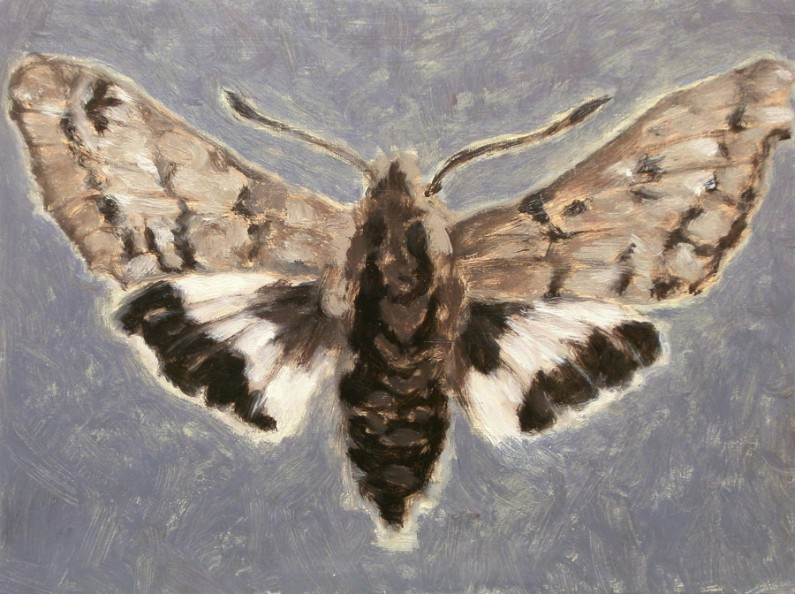 Patti Trimble, Sphinx Moth, oil on canvas, 9