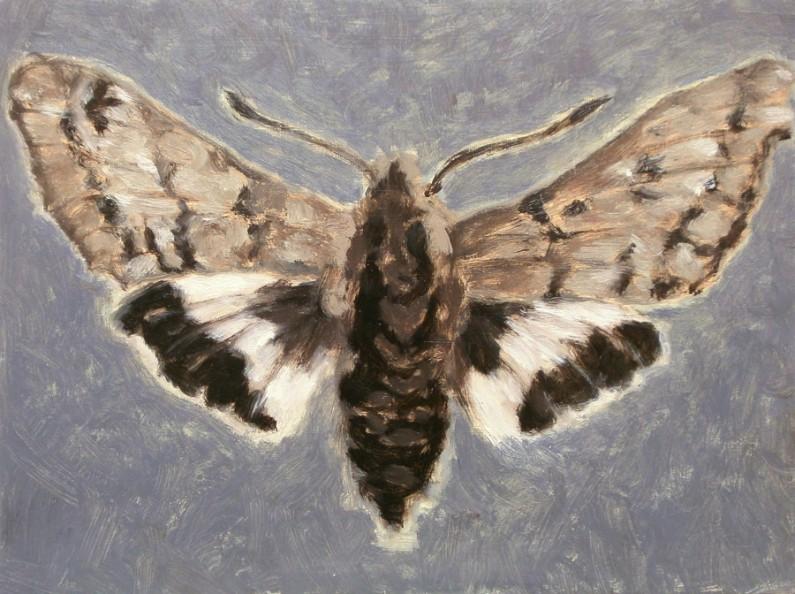 Patti Trimble, Sphinx Moth, oil on canvas, 9