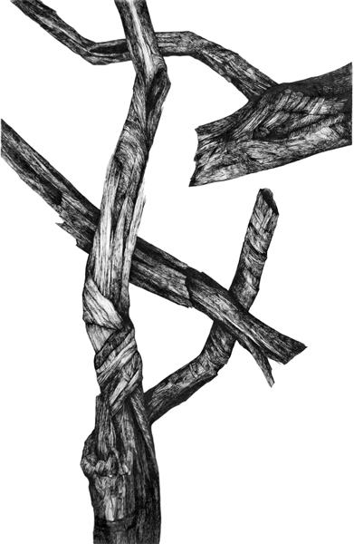 Zea Morvitz, CrossedBranches, ballpoint pen, 35 x 28