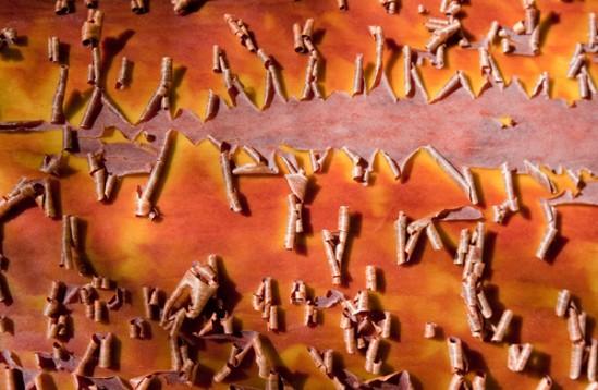 Marna Clarke, Manzanita #97 061508, digital print, 23x30