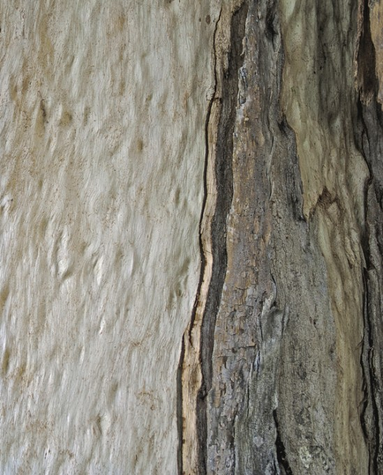 Marna Clarke_Eucalyptus #622_photograph_16x20