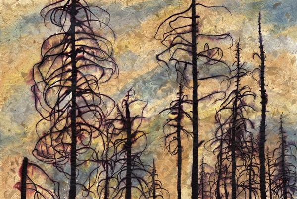Corrine Haverinen, Lassen Burnt Grove 4, ink on paper 25x37 ins.