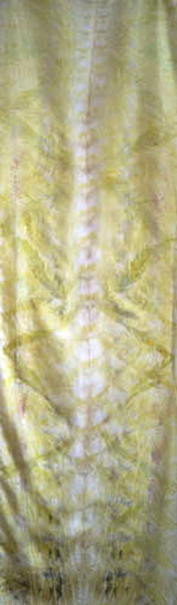 Chelsea Wills, Queens anne lace eucalptus & scotch broome coprint on silk, 19x60ins