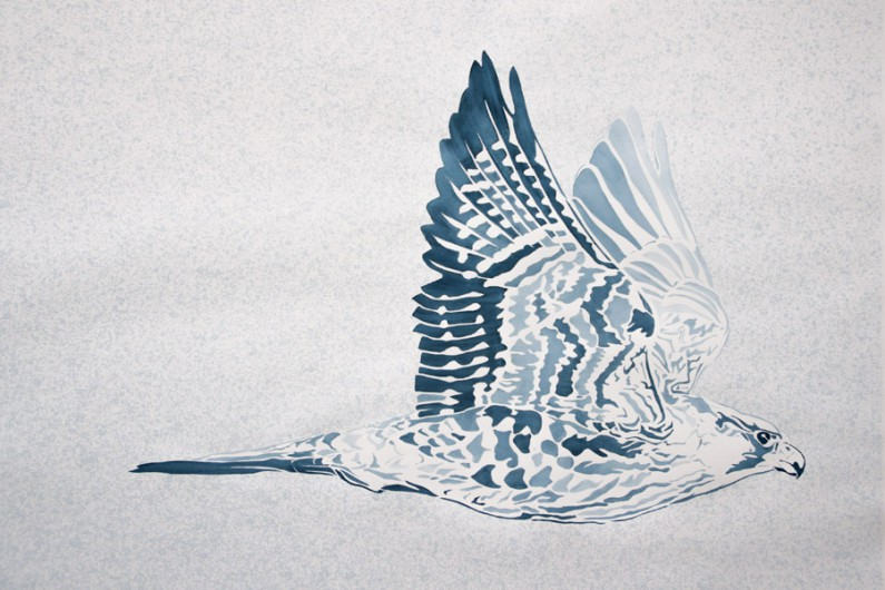 Xander Weaver, Arctic Peregrine Falcon,22x30-ins, watercolor-monoprint stencil
