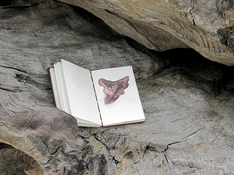 Tim Graveson, Notebook on a drift log, photograph