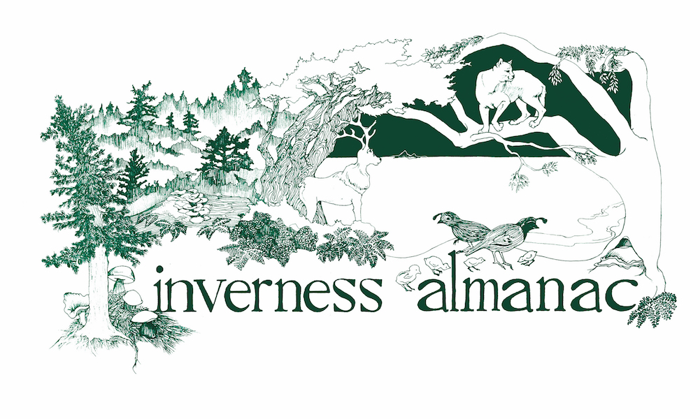 The Inverness Almanac: Collective Retrospective