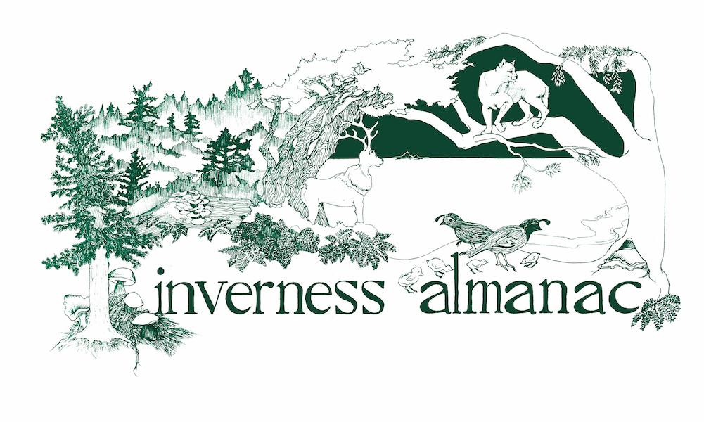 The Inverness Almanac: Collective Retrospective