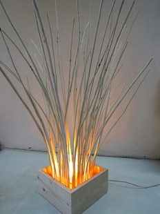 Toni Littlejohn, Willow Light