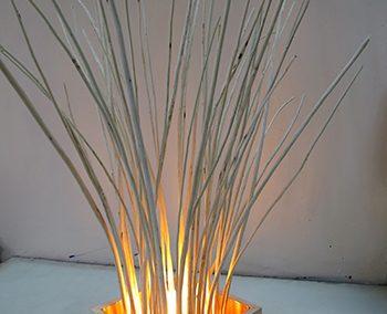 Toni Littlejohn, Willow Light