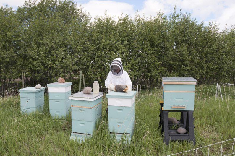 Marie-Luise, Klotz, BeeHive
