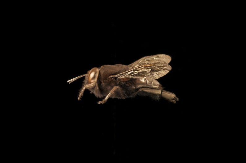 Marie-Luise_Klotz_very big bee
