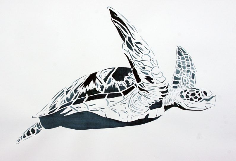 Xander Weaver-Scull, Green Sea Turtle, watercolor, monoprint, stencil